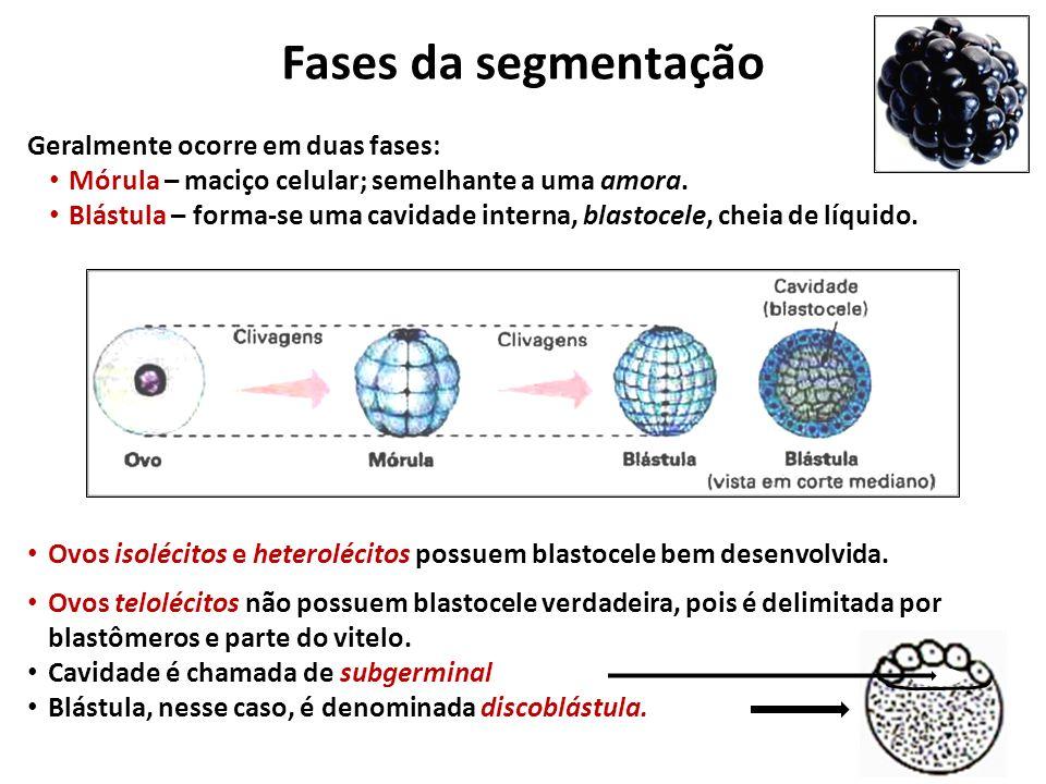 Fases da segmentação Geralmente ocorre em duas fases: