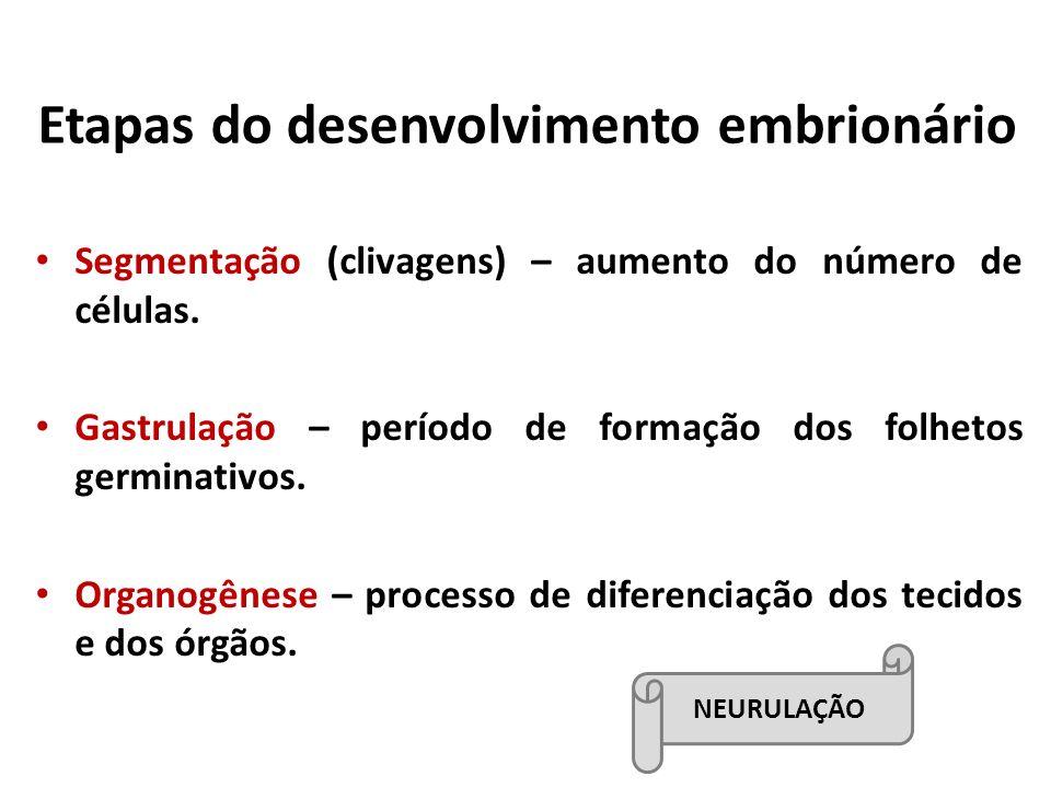 Etapas do desenvolvimento embrionário