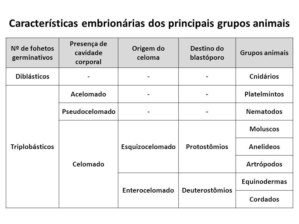 Características embrionárias dos principais grupos animais