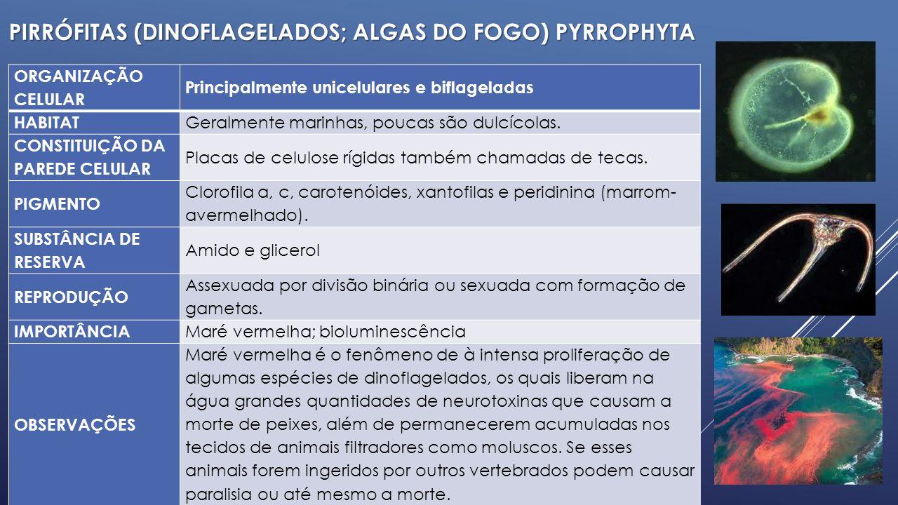 PIRRÓFITAS (dinoflagelados; algas do fogo) Pyrrophyta
