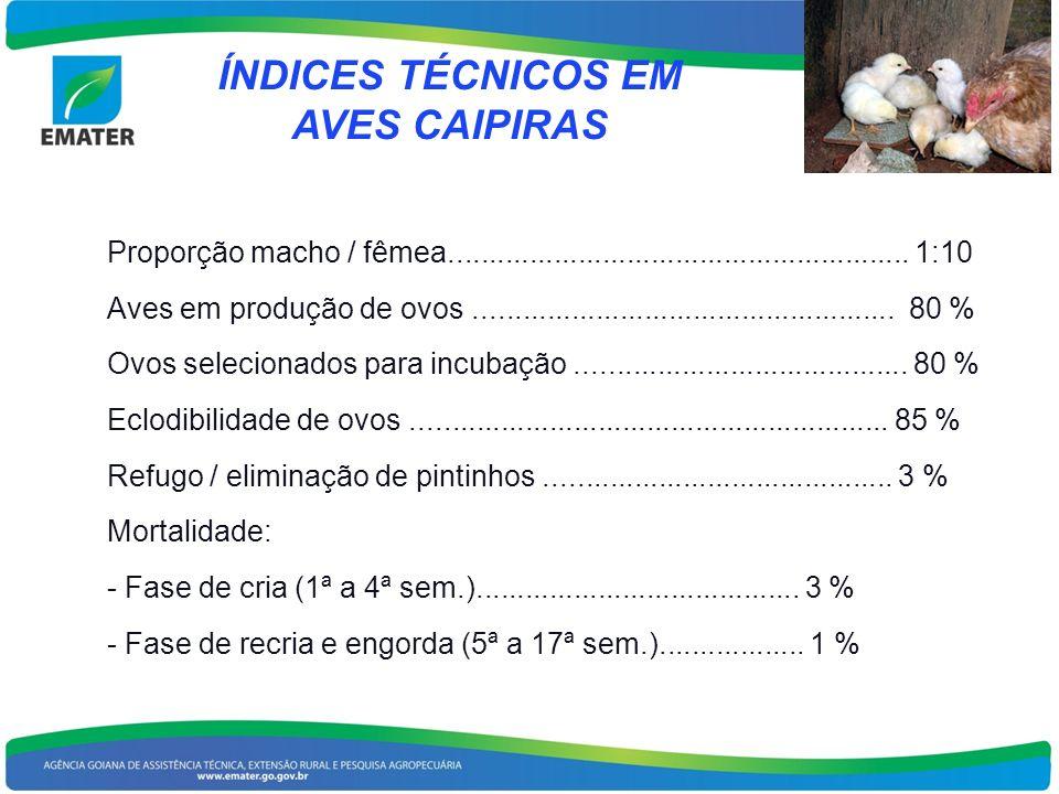 ÍNDICES TÉCNICOS EM AVES CAIPIRAS