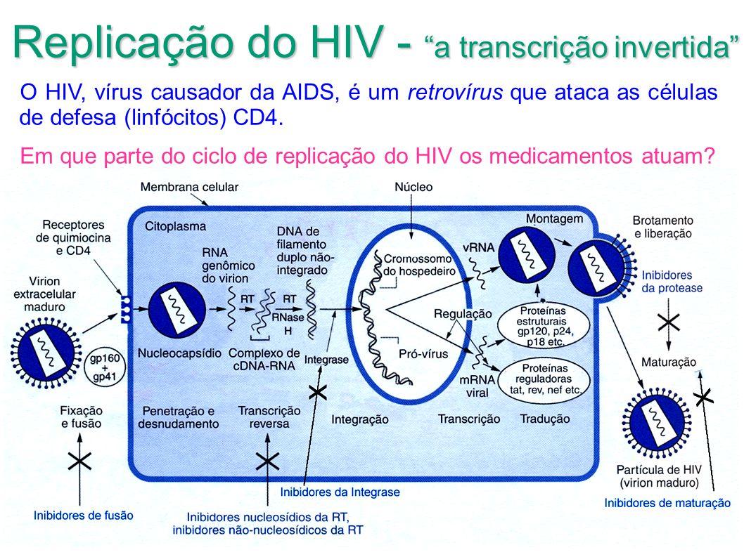 Replicação do HIV - a transcrição invertida