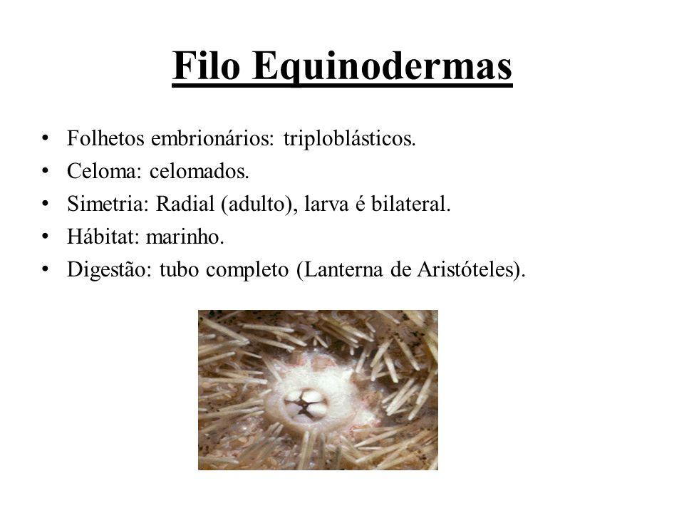 Filo Equinodermas Folhetos embrionários: triploblásticos.
