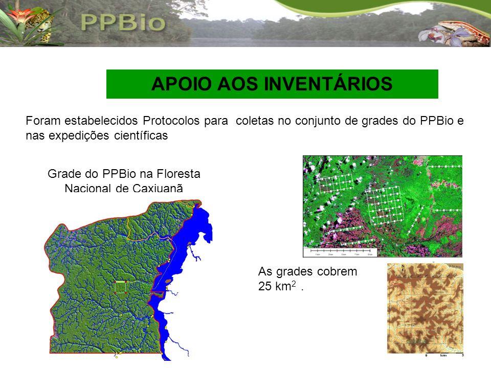 Grade do PPBio na Floresta Nacional de Caxiuanã