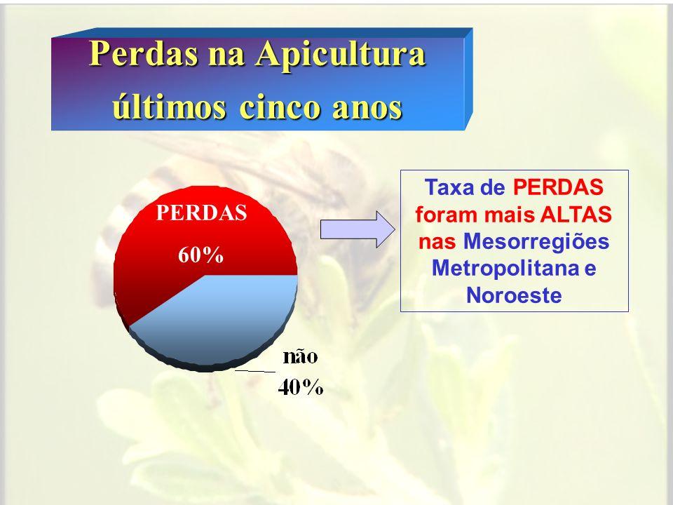 Perdas na Apicultura últimos cinco anos