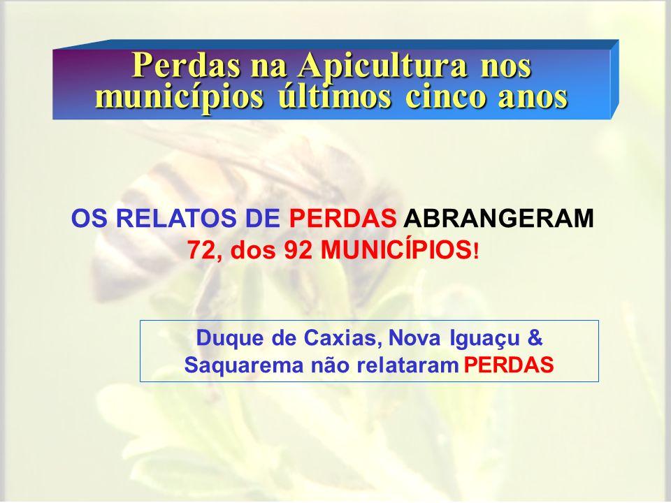 Perdas na Apicultura nos municípios últimos cinco anos