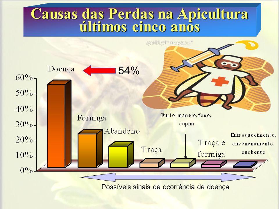 Causas das Perdas na Apicultura últimos cinco anos