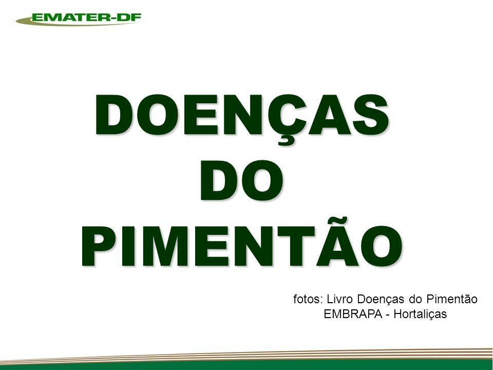 fotos: Livro Doenças do Pimentão EMBRAPA - Hortaliças