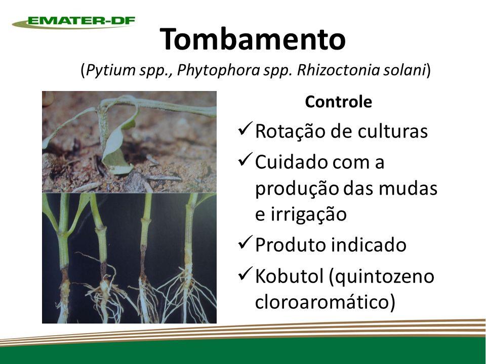Tombamento (Pytium spp., Phytophora spp. Rhizoctonia solani)