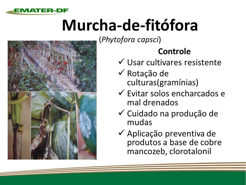 Murcha-de-fitófora (Phytofora capsci)