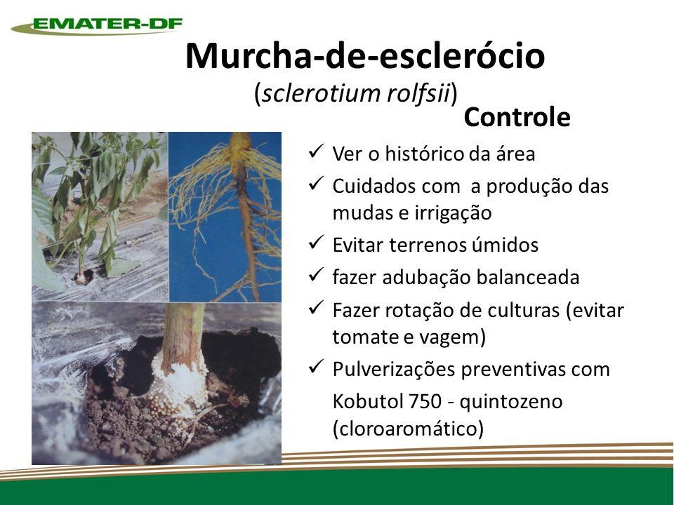 Murcha-de-esclerócio (sclerotium rolfsii)