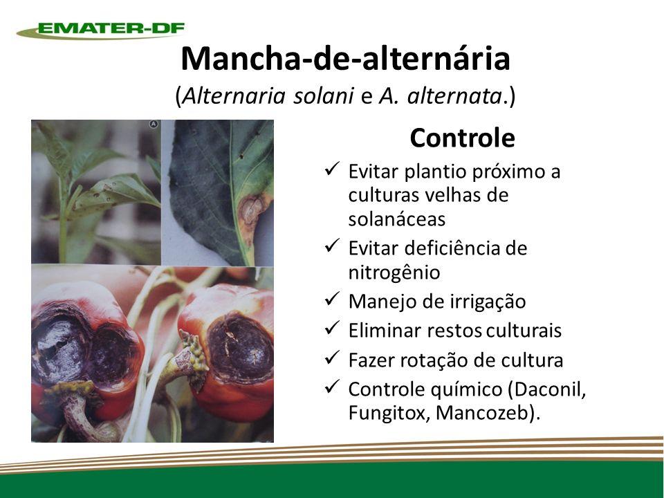 Mancha-de-alternária (Alternaria solani e A. alternata.)