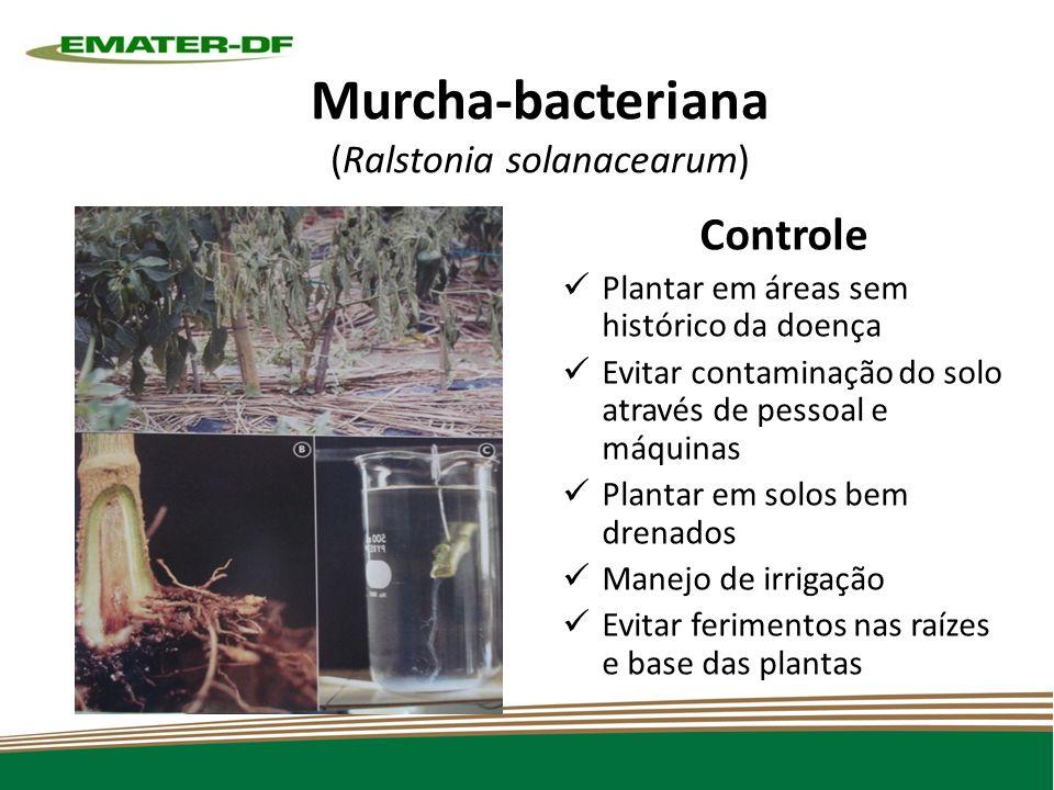 Murcha-bacteriana (Ralstonia solanacearum)