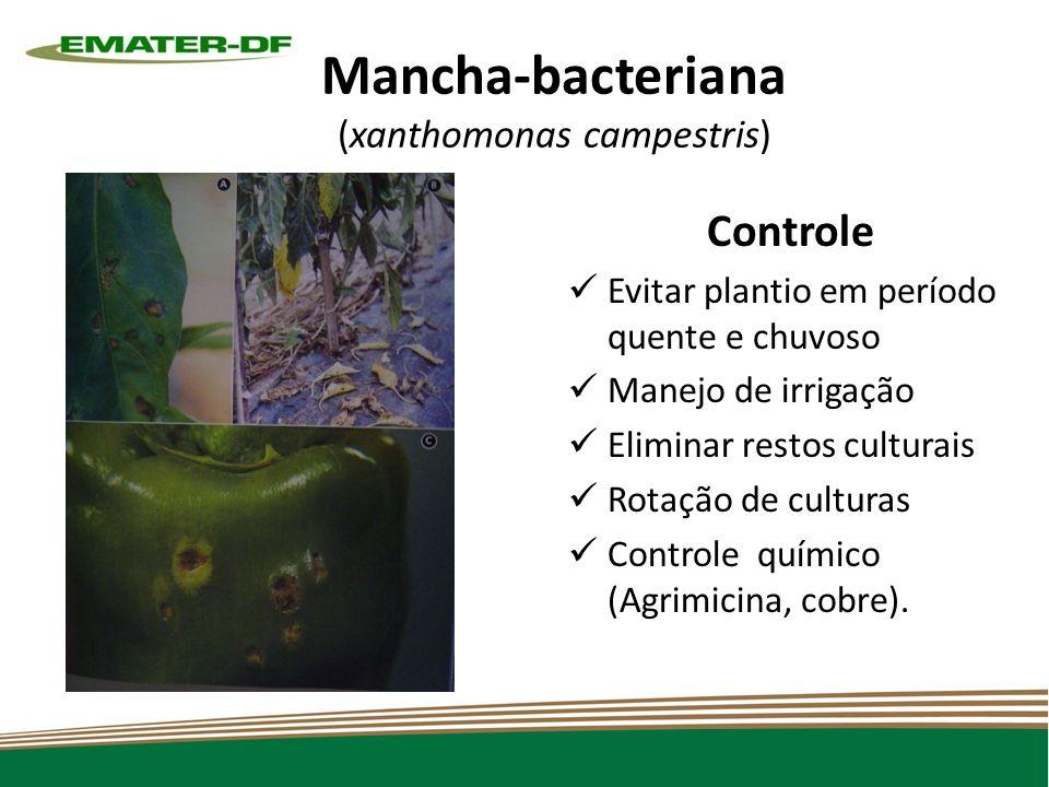 Mancha-bacteriana (xanthomonas campestris)