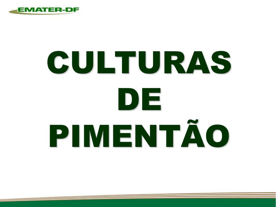 CULTURAS DE PIMENTÃO