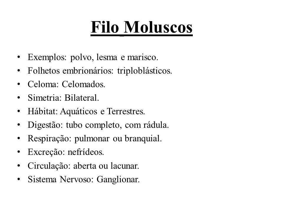 Filo Moluscos Exemplos: polvo, lesma e marisco.