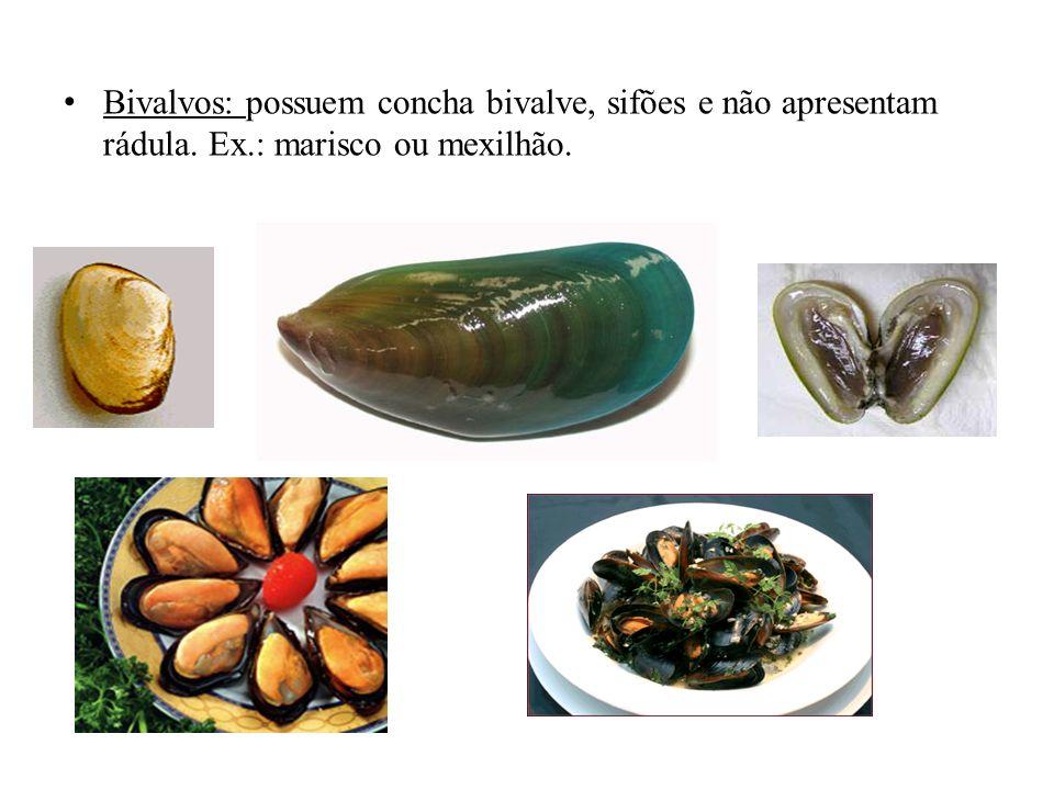 Bivalvos: possuem concha bivalve, sifões e não apresentam rádula. Ex