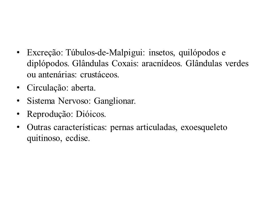 Excreção: Túbulos-de-Malpigui: insetos, quilópodos e diplópodos