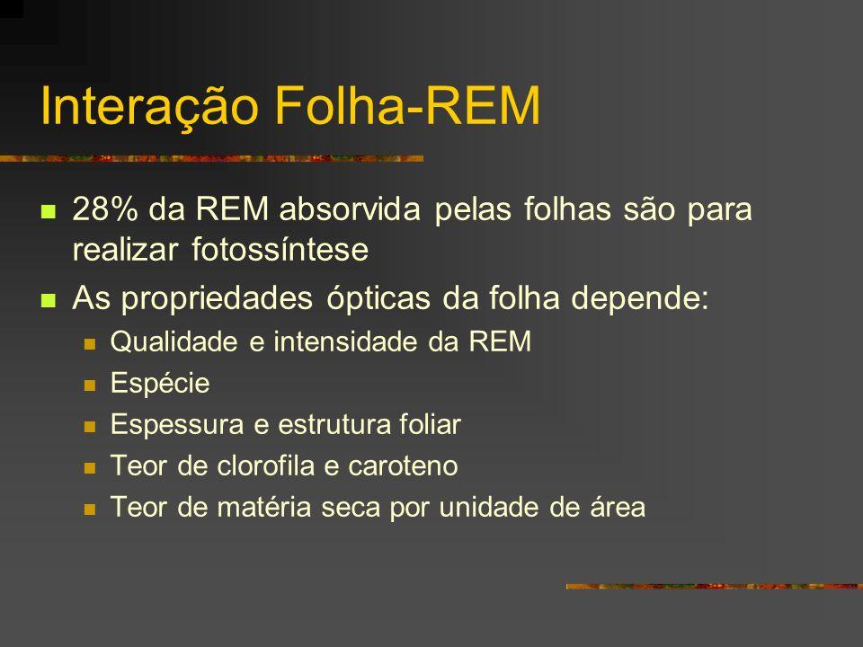 Interação Folha-REM 28% da REM absorvida pelas folhas são para realizar fotossíntese. As propriedades ópticas da folha depende: