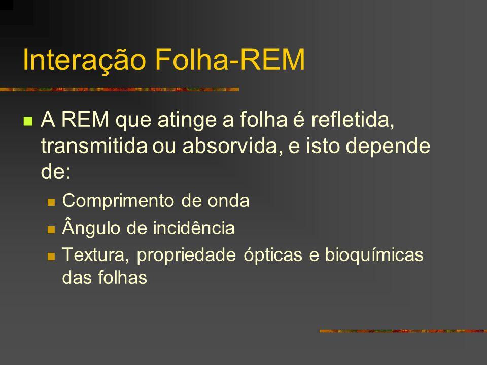 Interação Folha-REM A REM que atinge a folha é refletida, transmitida ou absorvida, e isto depende de: