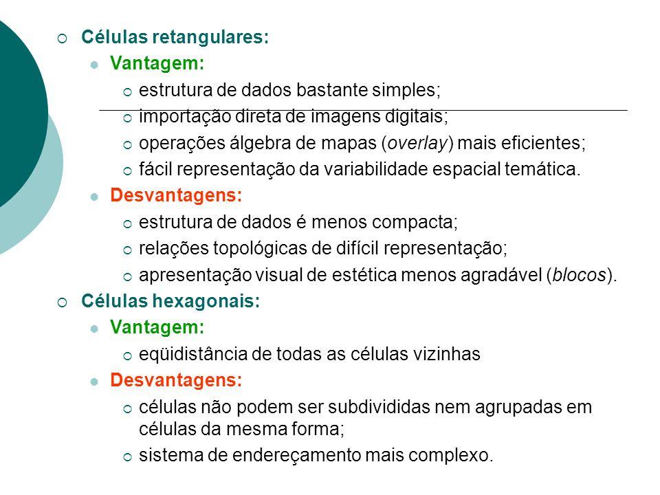 Células retangulares: