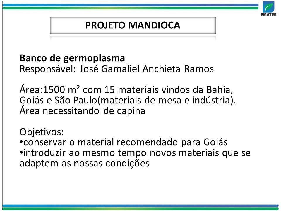 PROJETO MANDIOCA Banco de germoplasma. Responsável: José Gamaliel Anchieta Ramos.