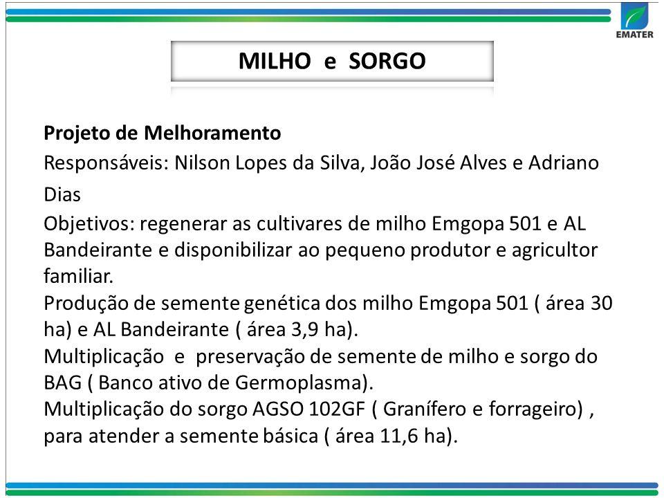 MILHO e SORGO Projeto de Melhoramento