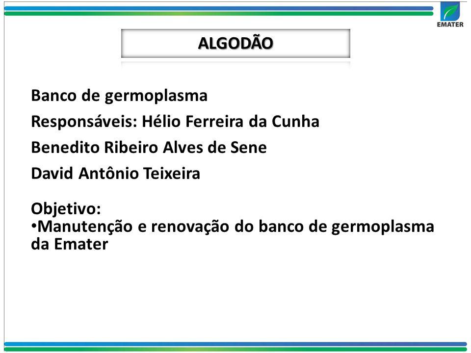 ALGODÃO Banco de germoplasma. Responsáveis: Hélio Ferreira da Cunha. Benedito Ribeiro Alves de Sene.
