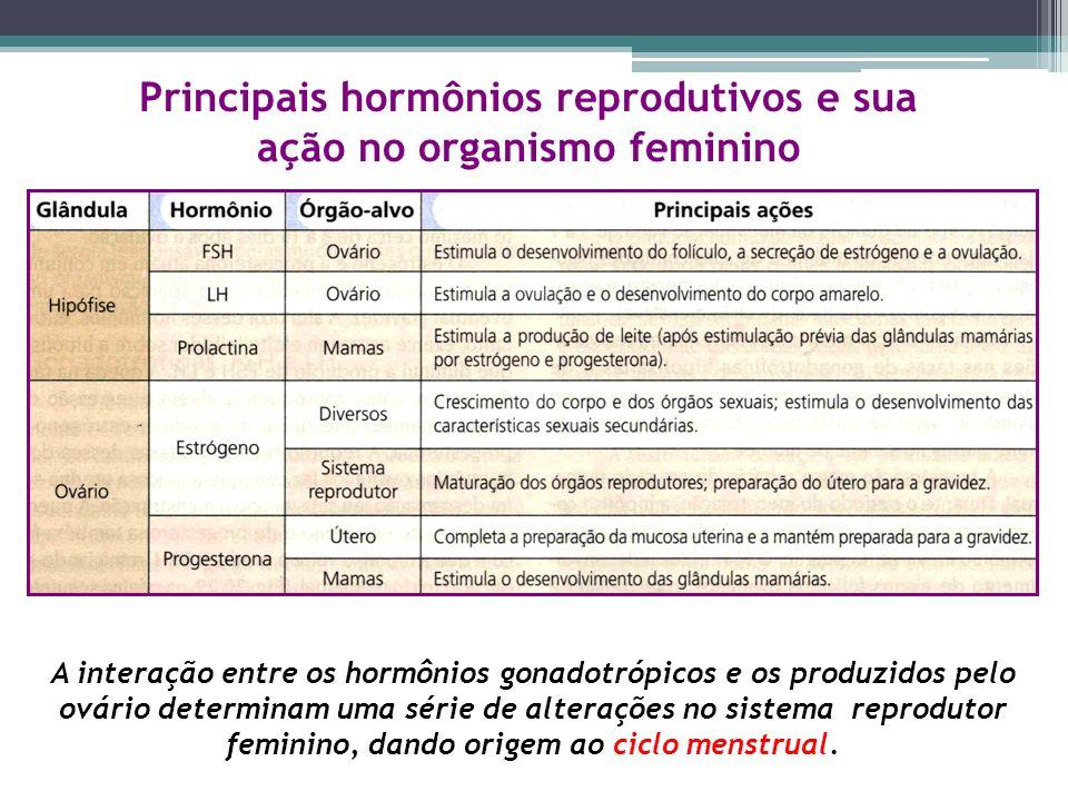 Principais hormônios reprodutivos e sua ação no organismo feminino