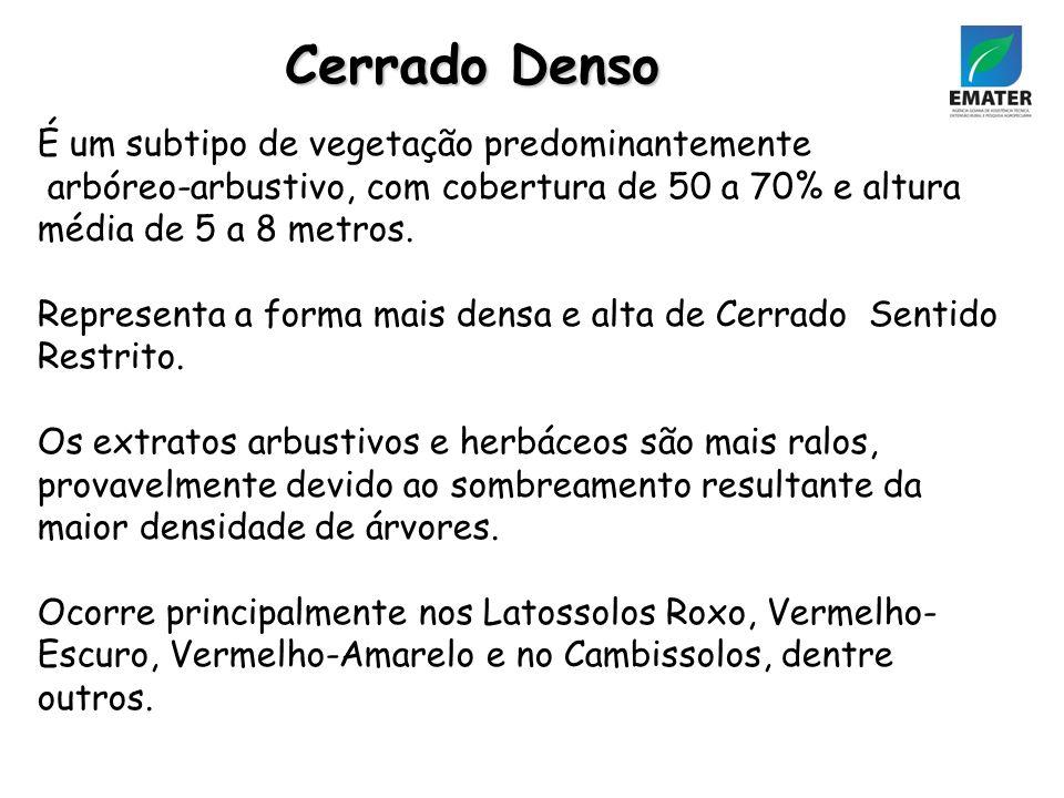 Cerrado Denso É um subtipo de vegetação predominantemente