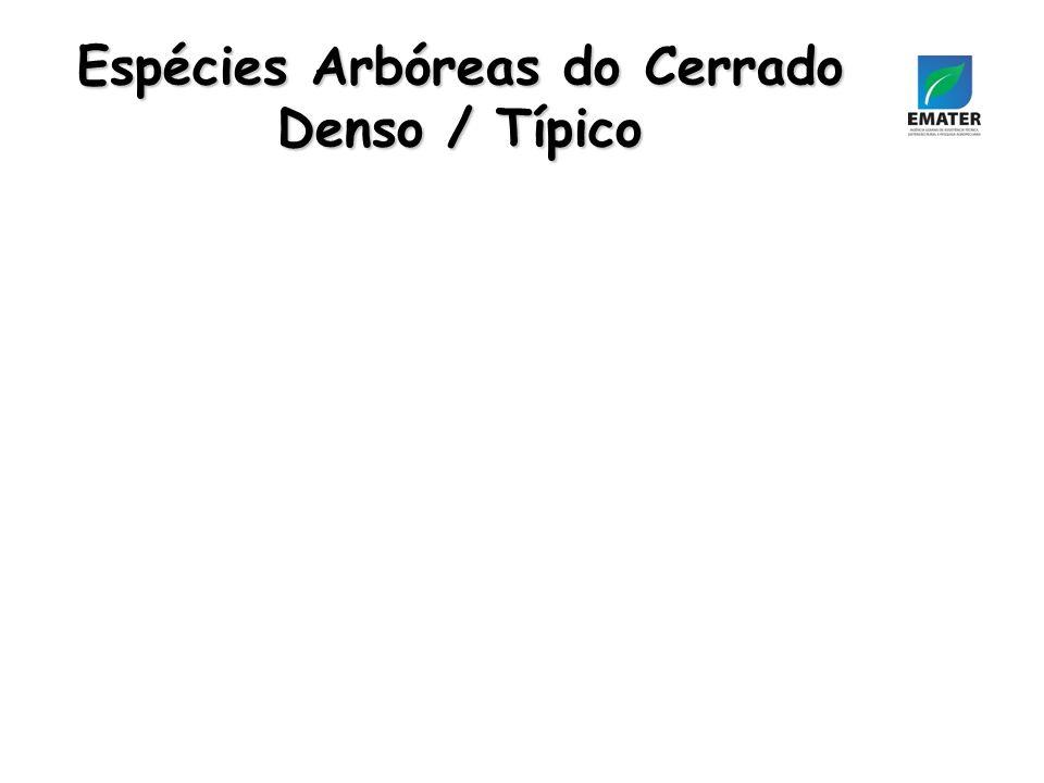 Espécies Arbóreas do Cerrado Denso / Típico
