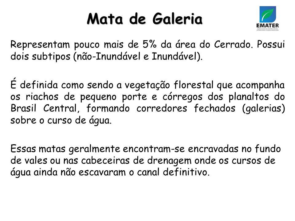 Mata de Galeria Representam pouco mais de 5% da área do Cerrado. Possui dois subtipos (não-Inundável e Inundável).