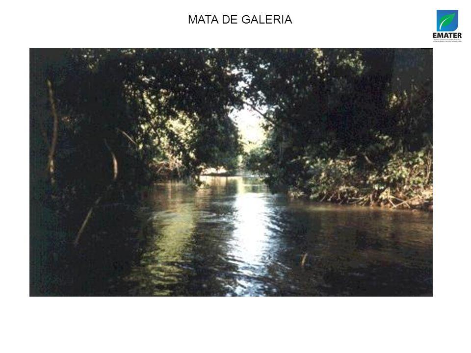 MATA DE GALERIA