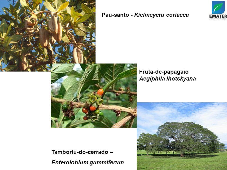 Pau-santo - Kielmeyera coriacea