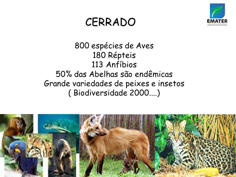 CERRADO 800 espécies de Aves 180 Répteis 113 Anfíbios