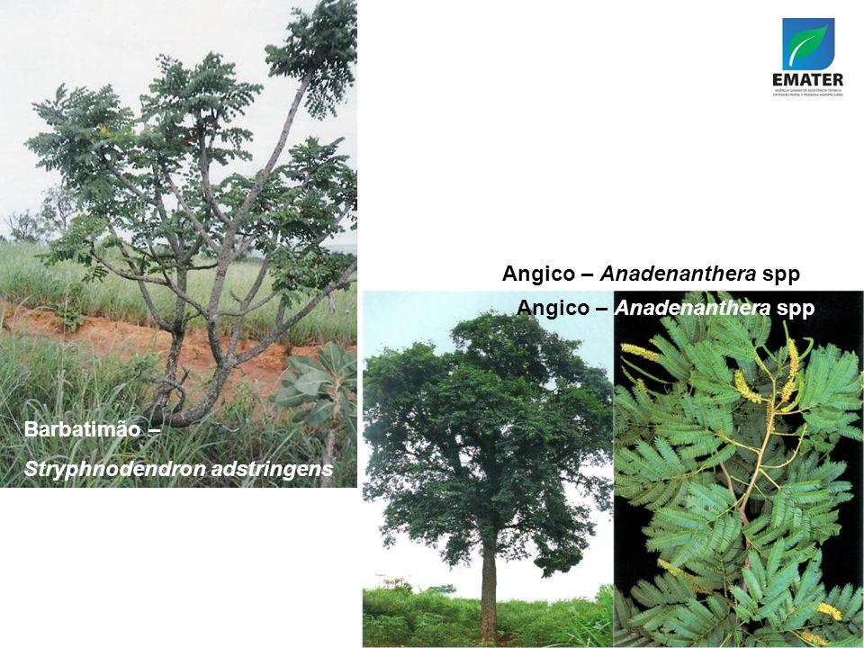 Angico – Anadenanthera spp