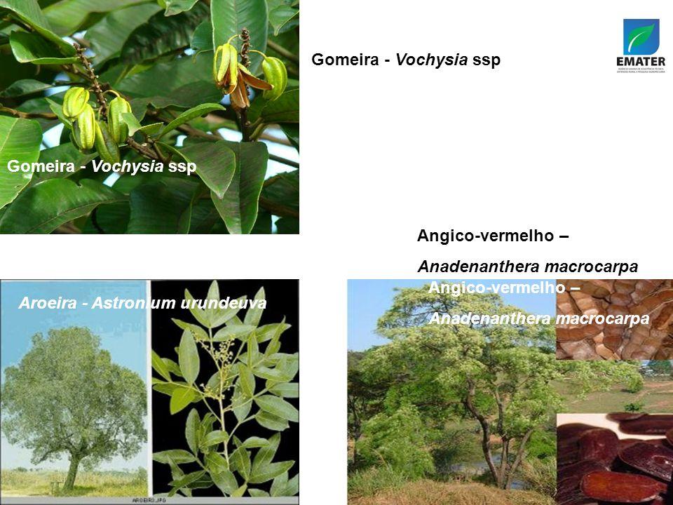 Gomeira - Vochysia ssp Gomeira - Vochysia ssp. Angico-vermelho – Anadenanthera macrocarpa. Aroeira - Astronium urundeuva.