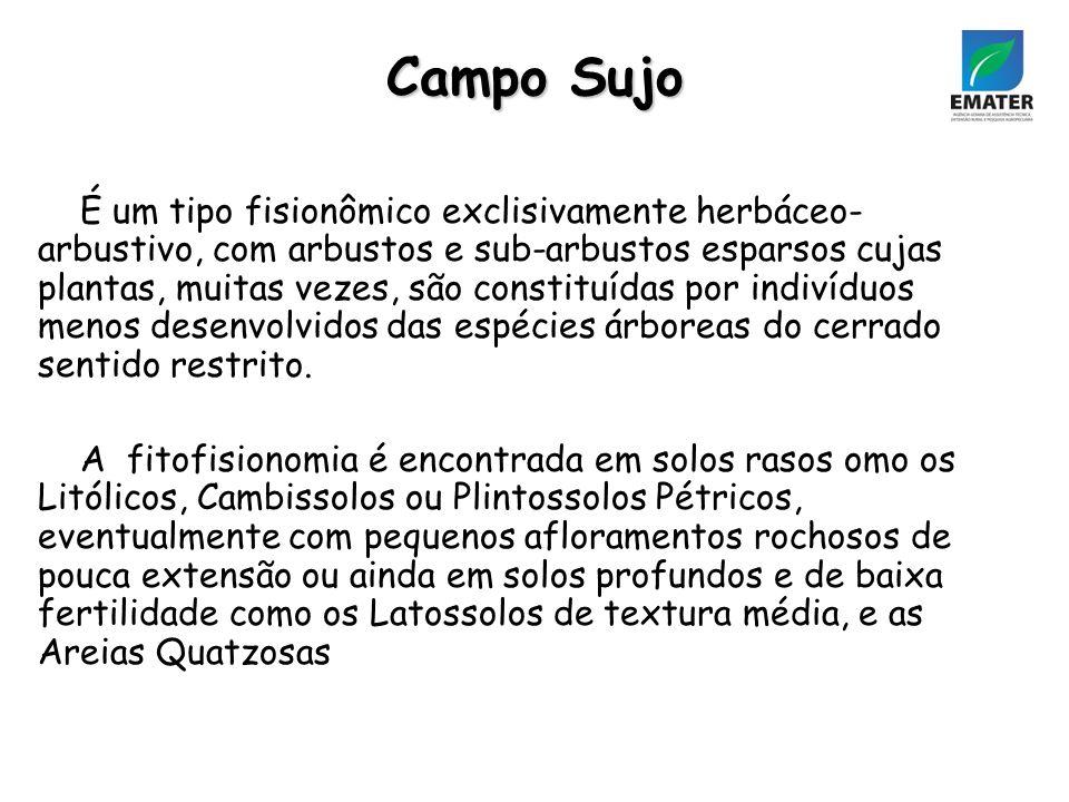 Campo Sujo