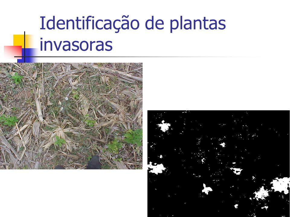 Identificação de plantas invasoras