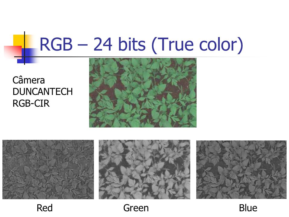 RGB – 24 bits (True color) Câmera DUNCANTECH RGB-CIR Red Green Blue