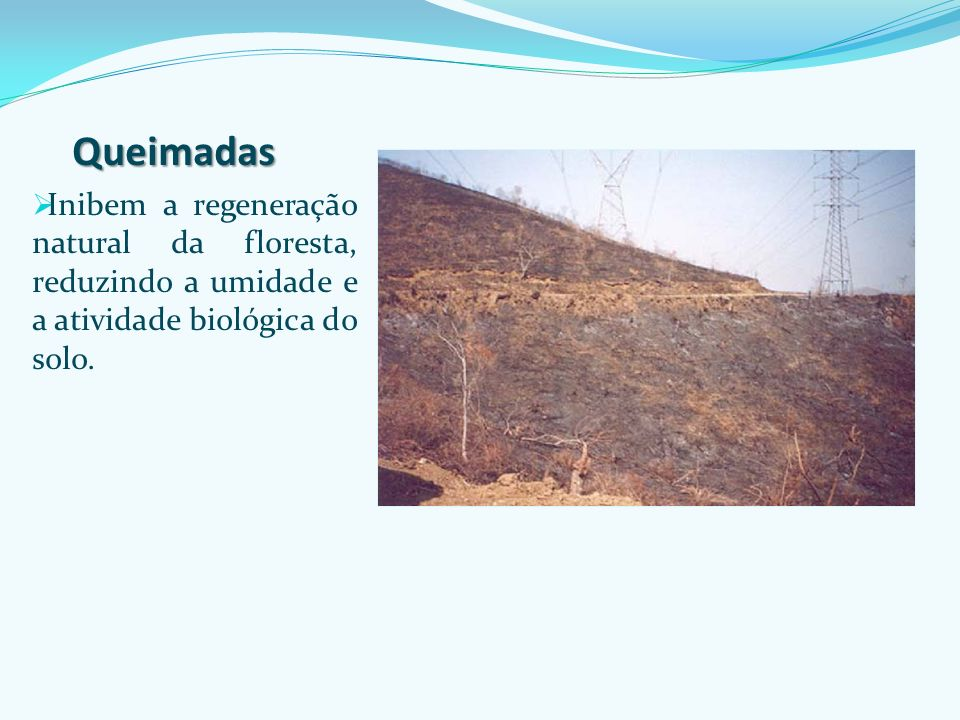 Queimadas Inibem a regeneração natural da floresta, reduzindo a umidade e a atividade biológica do solo.