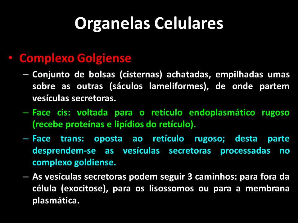 Organelas Celulares Complexo Golgiense