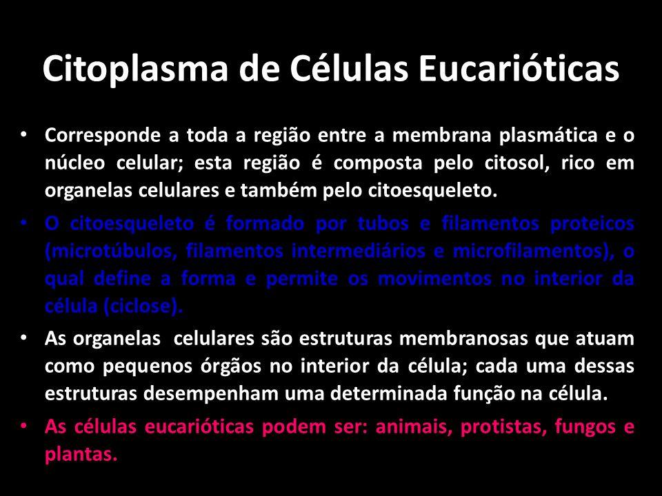 Citoplasma de Células Eucarióticas