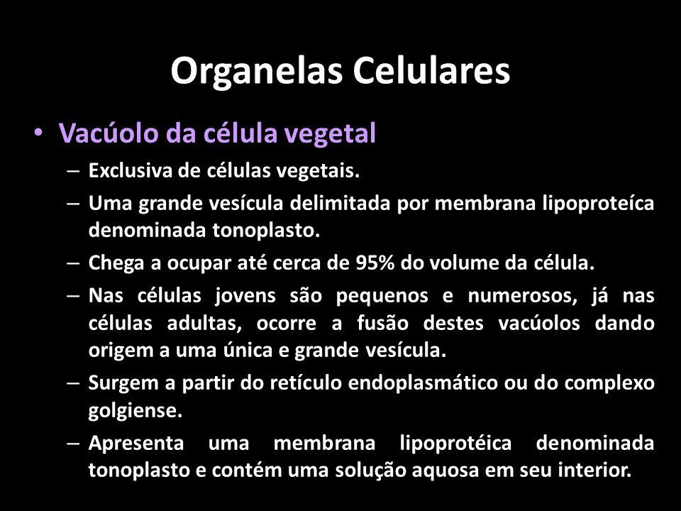 Organelas Celulares Vacúolo da célula vegetal