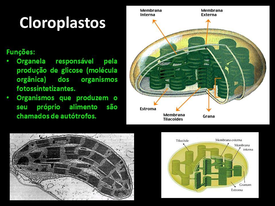Cloroplastos Funções: