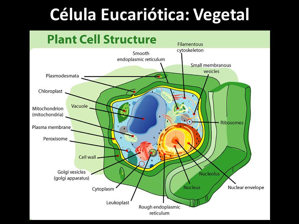 Célula Eucariótica: Vegetal