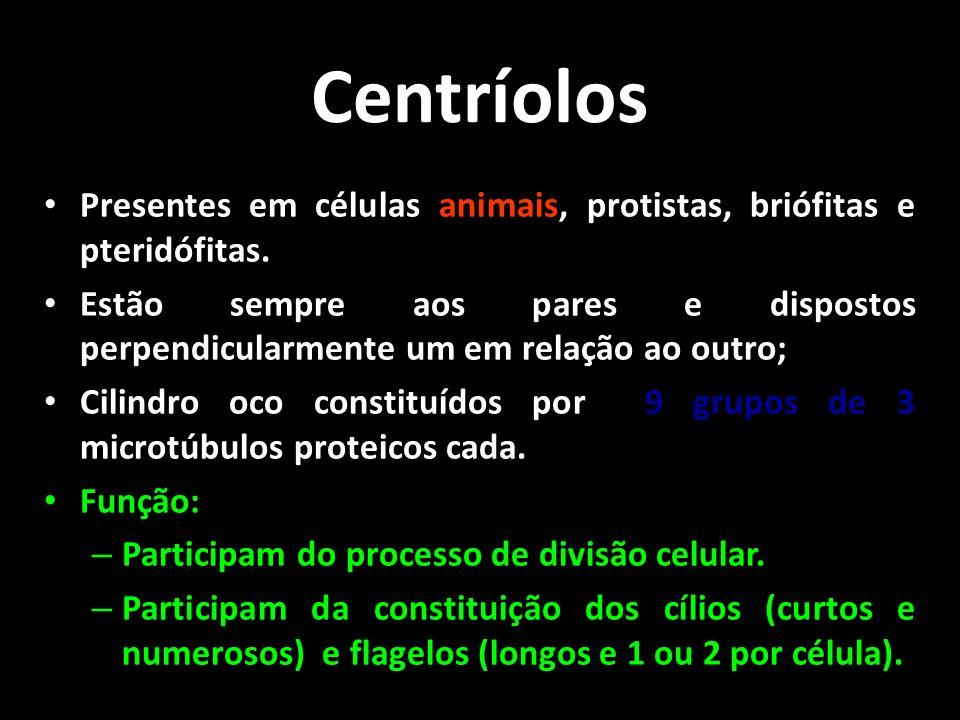 Centríolos Presentes em células animais, protistas, briófitas e pteridófitas.