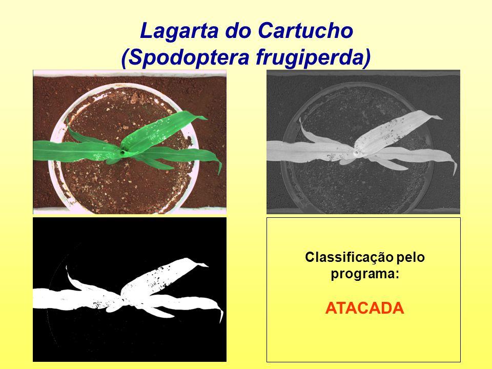 (Spodoptera frugiperda) Classificação pelo programa: