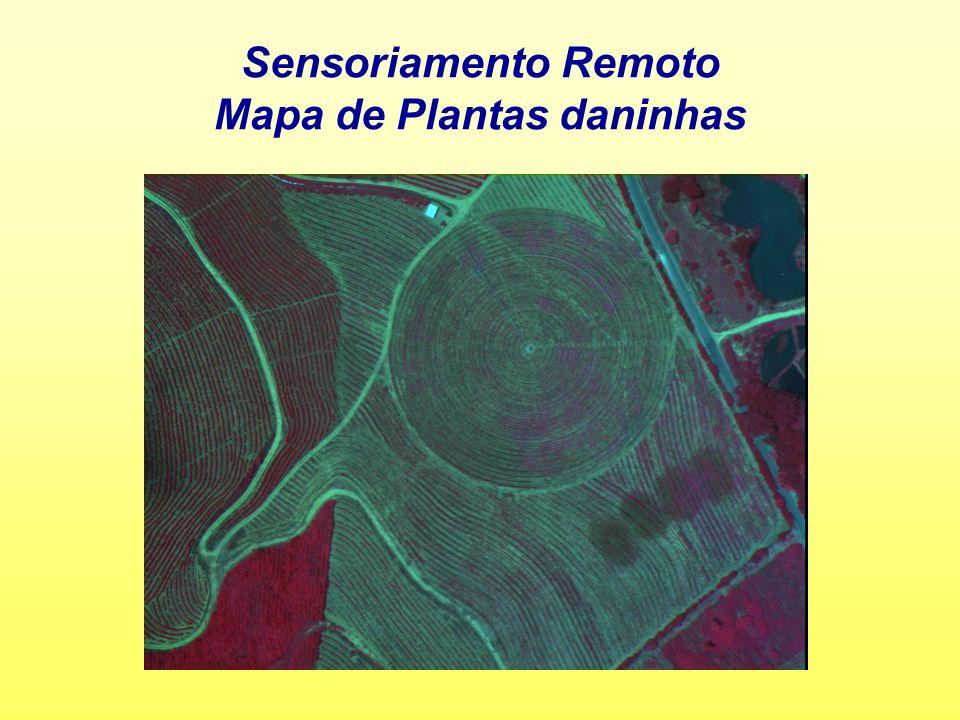 Sensoriamento Remoto Mapa de Plantas daninhas