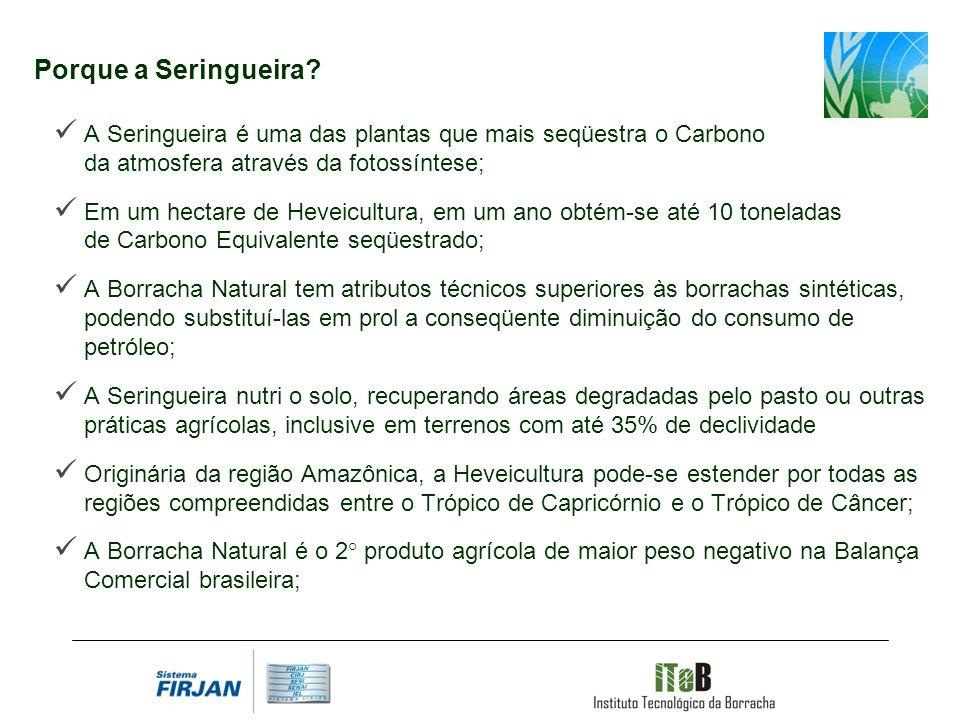 Porque a Seringueira A Seringueira é uma das plantas que mais seqüestra o Carbono da atmosfera através da fotossíntese;